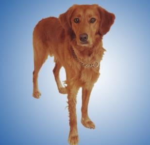Profilbild Knut .